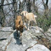 Appalachian Trail Day 54 - Laurel Creek - Niday Shelter