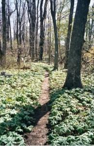 Appalachian Trail Day 60 - Cornelius Creek Shelter - Matts Creek Shelter