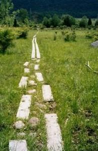 Appalachian Trail Day 96 - Goldsmith Road - Wawayanda Shelter