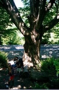 Dover Oak - Appalachian Trail Day 101 - Morgan Stewart Shelter - Ten Mile River