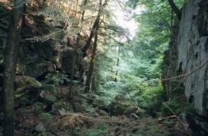 Appalachian Trail Day 107 - Great Barrington - Mt. Wilcox South Lean-to
