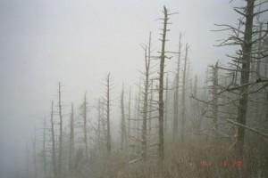 Appalachian Trail Day 21 - Tri Corner Knob - Davenport Gap