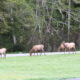 Elk - PCT 2007 Day 14 - Prairie Creek, CA – Eureka, CA