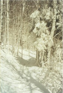 Appalachian Trail Day 34 - Roan High Knob - Apple House Shelter