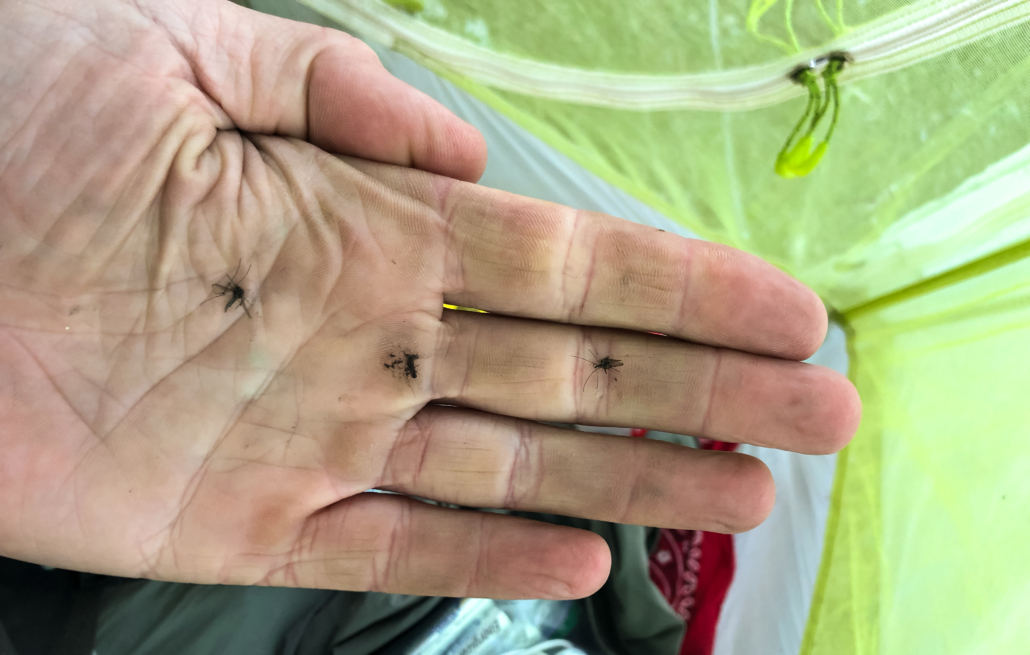 Night Terrors and Mozzies