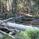 PCT 2007 Day 88 - Smedberg Lake - Grace Meadow